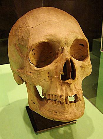 Czaszka Swena II Estrydsena. ©Wikimedia Commons.